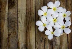 Plumeria στο ξύλινο υπόβαθρο πατωμάτων Στοκ Εικόνα