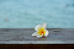 Plumeria στο ξύλο Στοκ Εικόνες