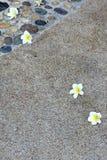 Plumeria στο πάτωμα σύστασης άμμου Στοκ Εικόνες