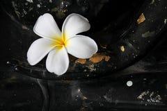 Plumeria στο χέρι του Βούδα Στοκ εικόνα με δικαίωμα ελεύθερης χρήσης