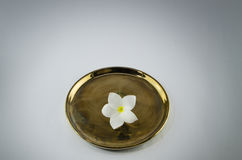 Plumeria στο χρυσό άσπρο υπόβαθρο πιάτων Στοκ Φωτογραφία