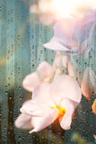 Plumeria της τέχνης μέσω του γυαλιού κοιτάγματος Στοκ Φωτογραφίες