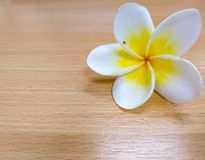 Plumeria, το άσπρο και κίτρινο λουλούδι που βρίσκεται στον ξύλινο πίνακα Στοκ φωτογραφία με δικαίωμα ελεύθερης χρήσης