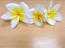 Plumeria, το άσπρο και κίτρινο λουλούδι που βρίσκεται στον ξύλινο πίνακα Στοκ Φωτογραφίες