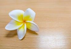 Plumeria, το άσπρο και κίτρινο λουλούδι που βρίσκεται στον ξύλινο πίνακα Στοκ φωτογραφίες με δικαίωμα ελεύθερης χρήσης