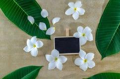 Plumeria, φύση, όμορφο άρωμα, aromatherapy, όμορφο, ομορφιά Στοκ Εικόνες