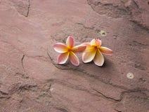 Plumeria δύο στο πάτωμα πετρών άμμου Στοκ Φωτογραφία