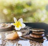 Plumeria или frangipani украшенные на утесе воды и камешка в стиле Дзэн Стоковое Фото