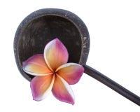 Plumeria и раковина кокоса Стоковая Фотография RF