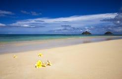 plumeria цветений пляжа тропический Стоковые Фотографии RF