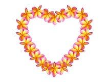 Plumeria цветет влюбленность формы Стоковое Изображение