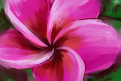 Plumeria цветка картины Стоковое Изображение RF