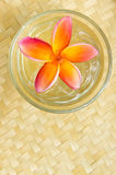 Plumeria. Tropical Plumeria for spa and wellness concept Royalty Free Stock Photos