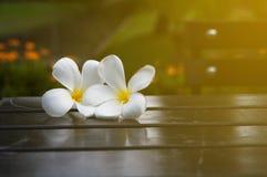 Plumeria auf Tabelle im Garten mit dem Sonnenlicht, verwischt und zurückhaltend Lizenzfreie Stockfotografie