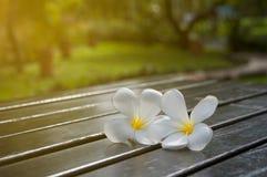 Plumeria auf Tabelle im Garten mit dem Sonnenlicht, verwischt und zurückhaltend Lizenzfreie Stockfotos