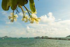 Plumeria av den Sattahip stranden Fotografering för Bildbyråer