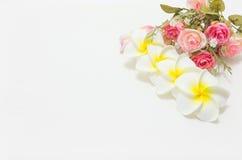 Plumeria avec les roses roses et blanches Photos stock