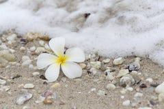 Plumeria beach. Side spa relaxation Stock Photo