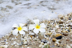 Plumeria beach. Side spa relaxation Stock Images