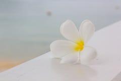 Plumeria blanc sur le fond en bois de table et de plage Images libres de droits