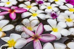 Plumeria blanco en agua. Fotos de archivo libres de regalías