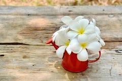 Plumeria blommar i röd vas på trätabellen Royaltyfri Foto