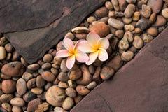 Plumeria blommar på grus mellan sandstenar royaltyfri foto