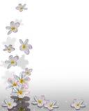 Plumeria-Blumen-Ecken-Auslegung Lizenzfreie Stockfotografie