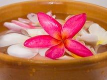 Plumeria-Blumenrosafloss hervorragend im Schüsselbraun Stockfotos