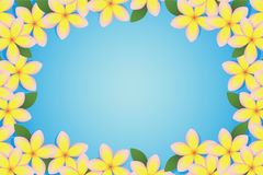 Plumeria Border stock illustration