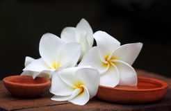 Plumeria with brown pottery Stock Images