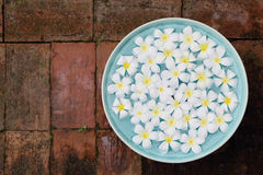 Plumeria in a celadon basin on brick background. Stock Photo