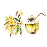 Plumeria and coconut isolated on white background. Tropical set, Watercolor sketch object Royalty Free Stock Photo