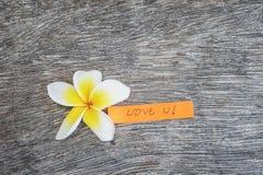 Plumeria com amor você mensagem na madeira do grunge Fotografia de Stock
