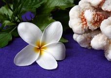 Plumeria and Coral Stock Photo
