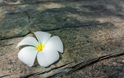 Plumeria On Cracked Textured Wood In Shadow Of The Tree Royalty Free Stock Images