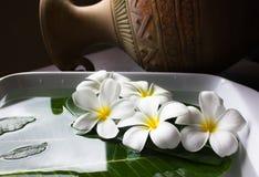 Plumeria da flor com vaso do vintage Imagens de Stock