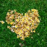 Plumeria dans la forme d'amour Photographie stock