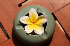 Plumeria de fleur Photos stock