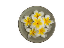 Plumeria in dishes Royalty Free Stock Image
