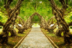 Plumeria drzewa tunel obrazy royalty free