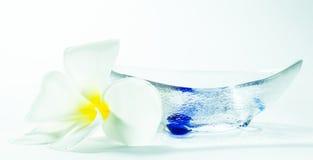 Plumeria e bacia Foto de Stock Royalty Free