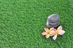 Plumeria e pietre sull'erba Fotografie Stock