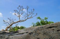 Plumeria en el cielo azul Foto de archivo libre de regalías