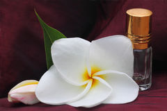 Plumeria with essence bottle Royalty Free Stock Image