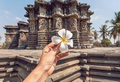 Plumeria för vit blomma som symbol av lugn nära den hinduiska templet för 12th århundrade i Indien Semesterstil Arkivbilder