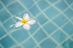 Flower floating on water Stock Photo
