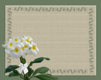 Plumeria floral border Royalty Free Stock Photography