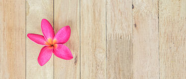 Plumeria flowe Royalty Free Stock Photography