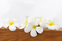 Plumeria flower. On wood box Royalty Free Stock Photography